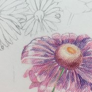 akvarelove-pastelky3